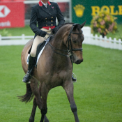 Major Buck at Badminton 2010: Photo Trevor Holt