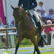 Primitive Pistol at Bramham 2011: Photo Trevor Holt